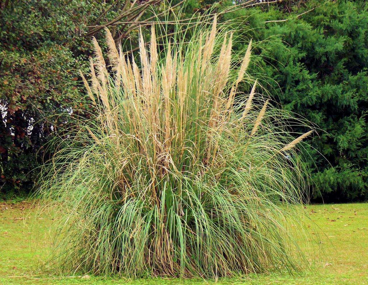 Jakie sadzić trawy ozdobne