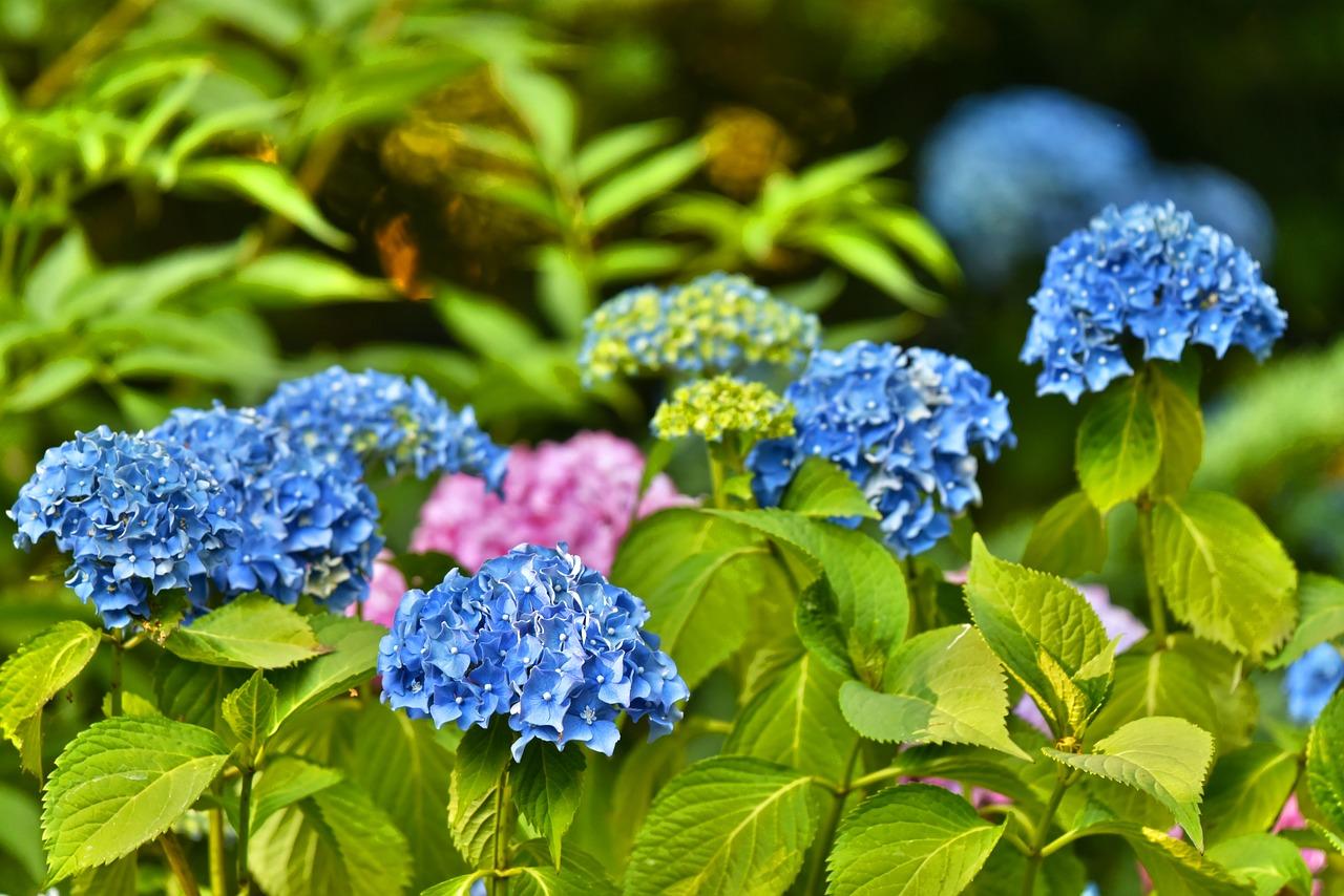 Kwiaty, które lubią cień