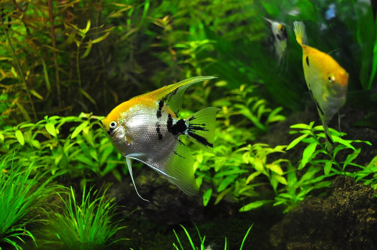 Sztuczne rośliny w akwarium