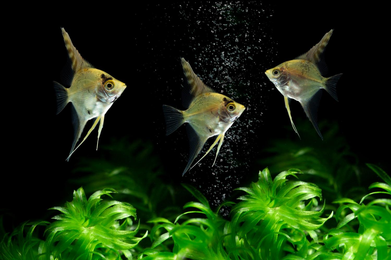 Sztuczne rośłiny w akwarium z rybkami