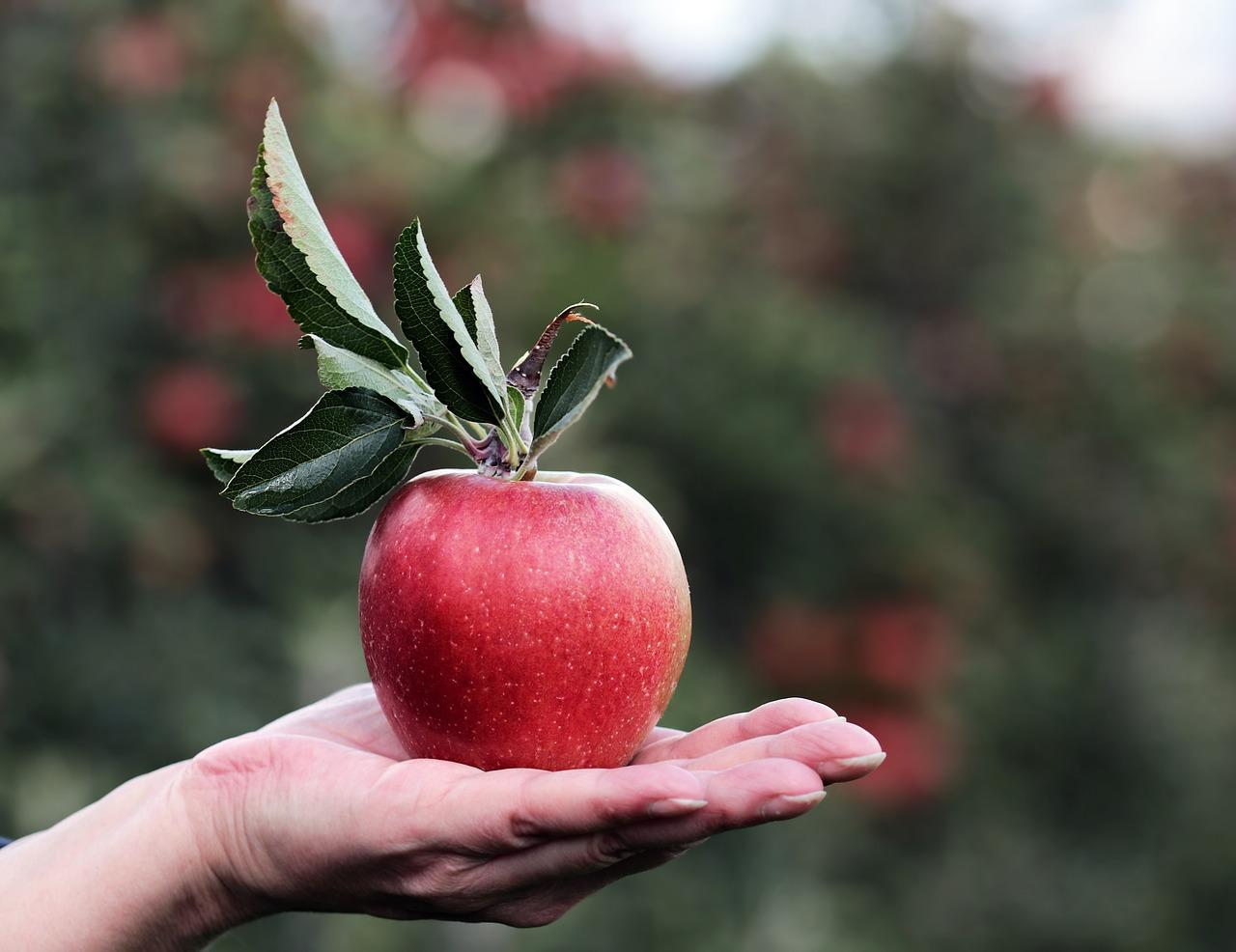 Czerwone jabłko na dłoni