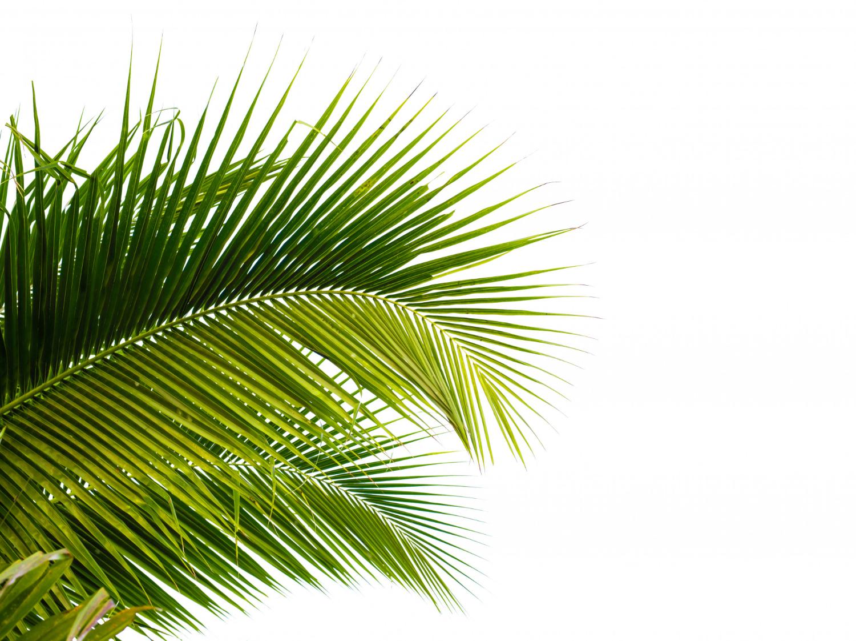 Egzotyczne palmy do domu