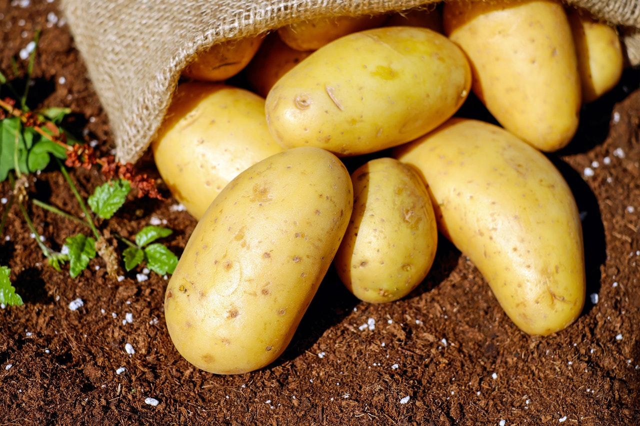 Najpopularniejsze odmiany ziemniaków