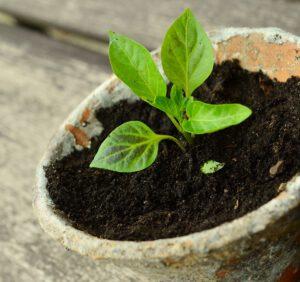 Czym jest ziemiórka i jak ją rozpoznać? Poznaj sposoby jej zwalczania