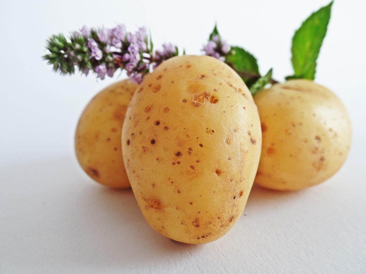Ziemniaki – odmiany wczesne, średnio wczesne, średnio późne i późne