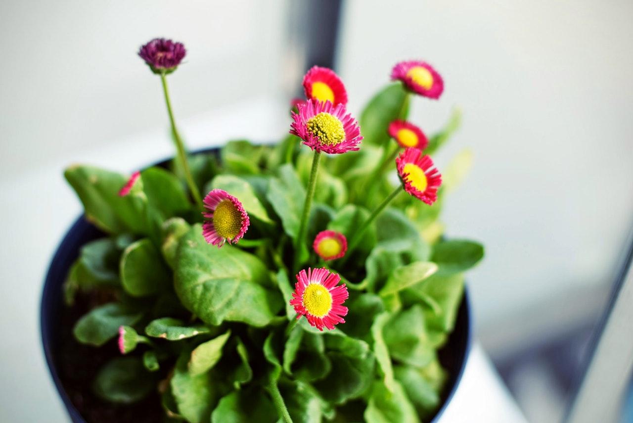 Larwy ziemiórki na kwiatach