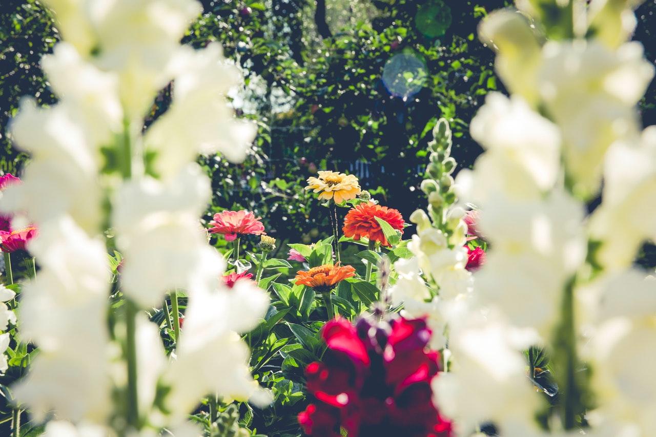 Piękne kwiaty w aranżowanym przydomowym ogrodzie