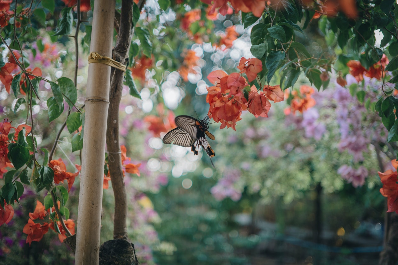 Aranżowanie przydomowych ogrodów