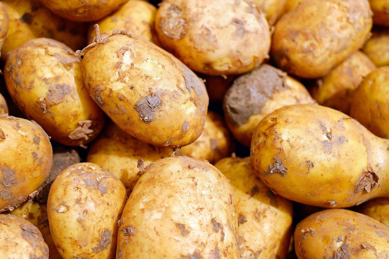 Odmiany ziemniaków w Polsce