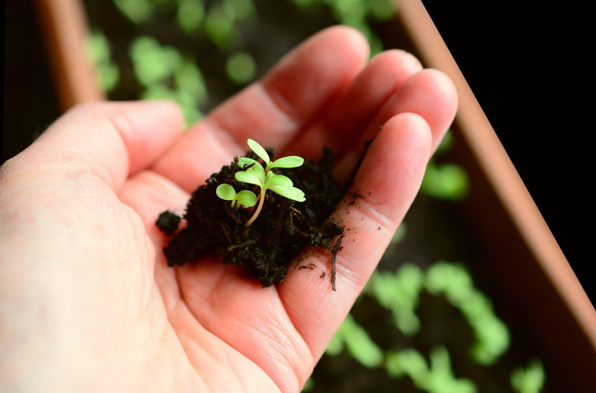 roślina w dłoni