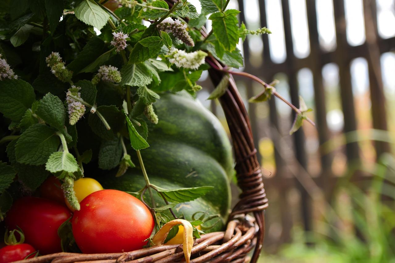 Uprawa pomidorów w ogródku