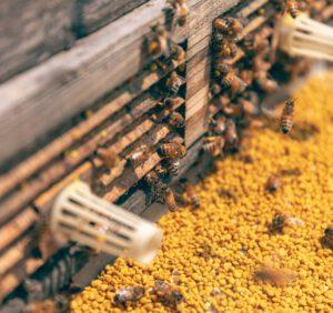 Co wyróżnia najważniejsze rodzaje uli?