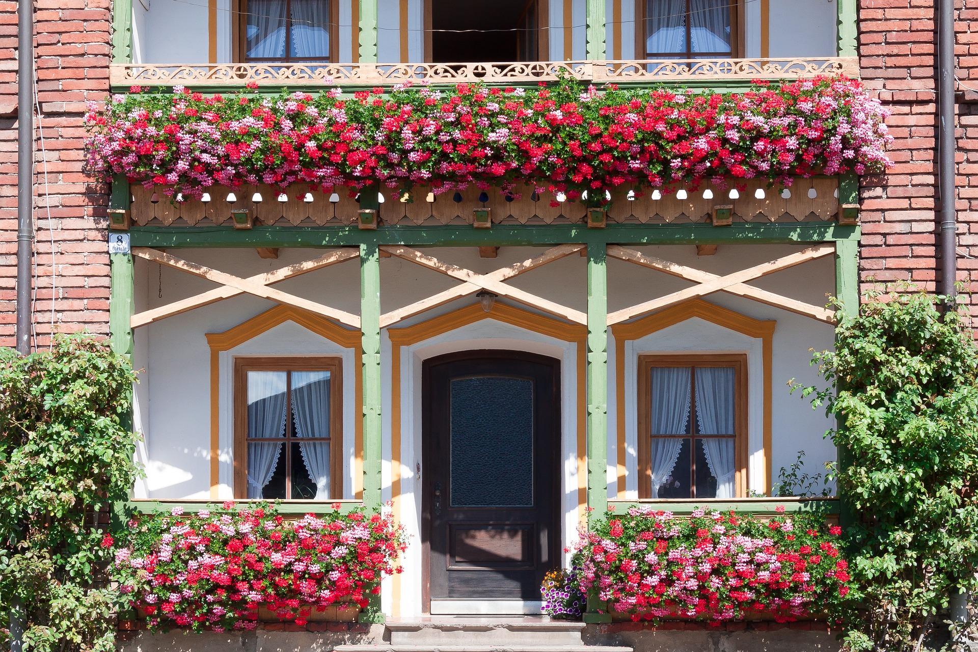 Nawożenie roślin balkonowych - jak należy o to zadbać?