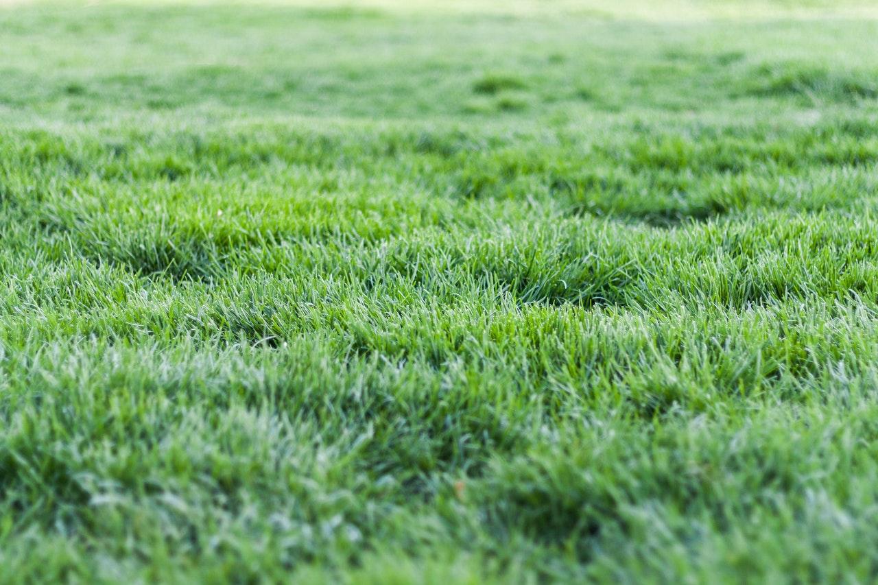 Napowietrzanie trawnika - aeracja