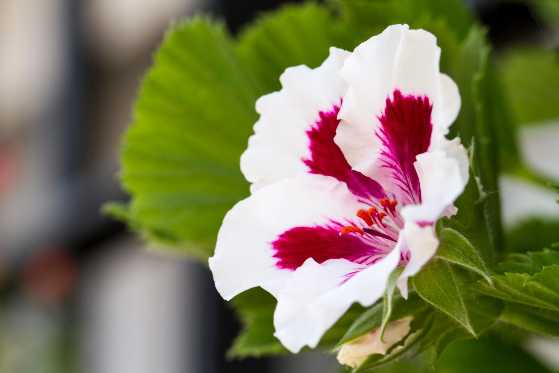 Popularne kwiaty doniczkowe – top 10!