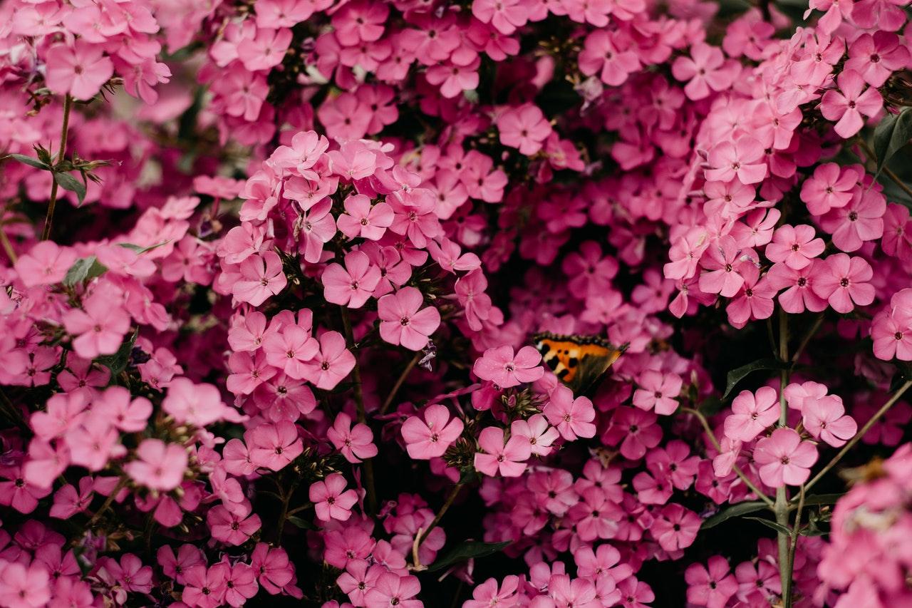 Przesadzone kwiaty.