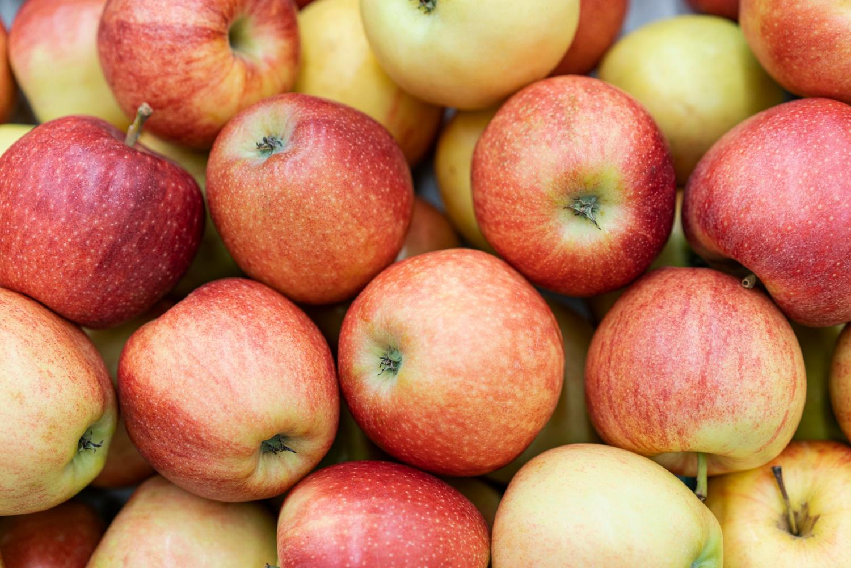 Odmiana jabłoni