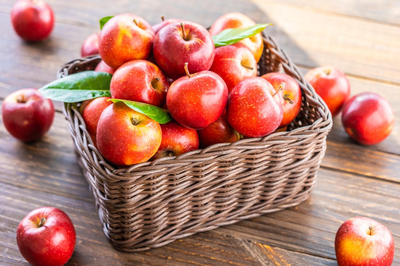 Zimowa odmiana jabłoni