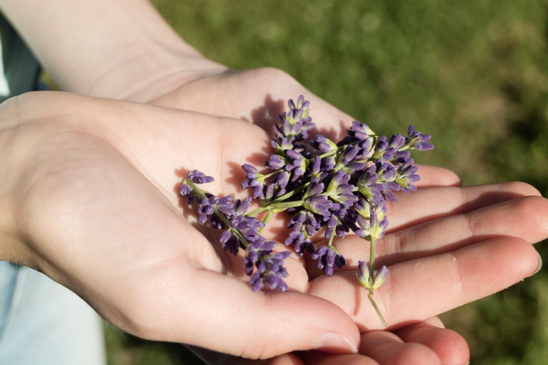Jadalne kwiaty szałwii