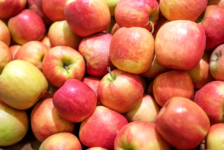 Odmiana zimowa jabłoni