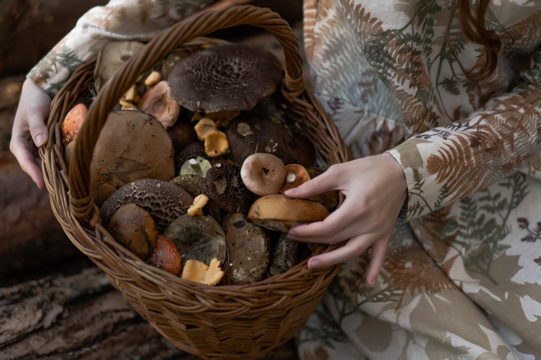 Zbieranie grzybów w tym podgrzybków