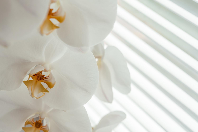 Biała odmiana storczyka