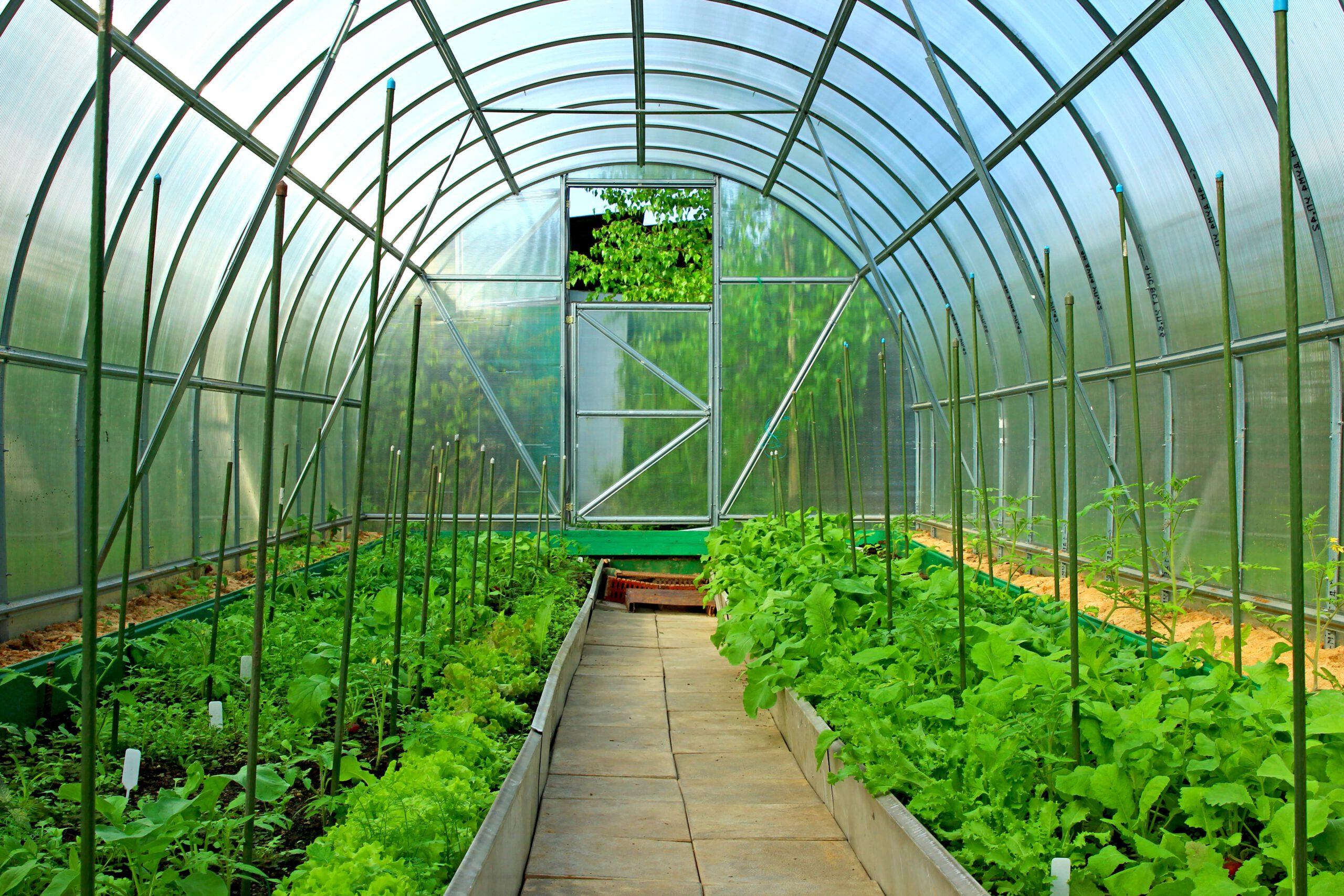 Szklarnia ogrodowa z poliwęglanu lity