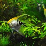Jakie sztuczne rośliny do akwarium wybrać?