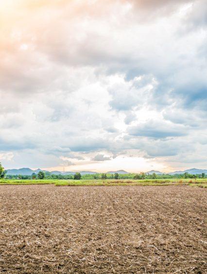 Glebogryzarka ogrodowa – do czego służy, jaką kupić najlepiej?