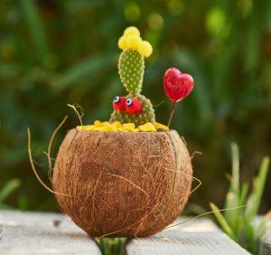 Egzotyczne kwiaty do domu – jakie wybrać?