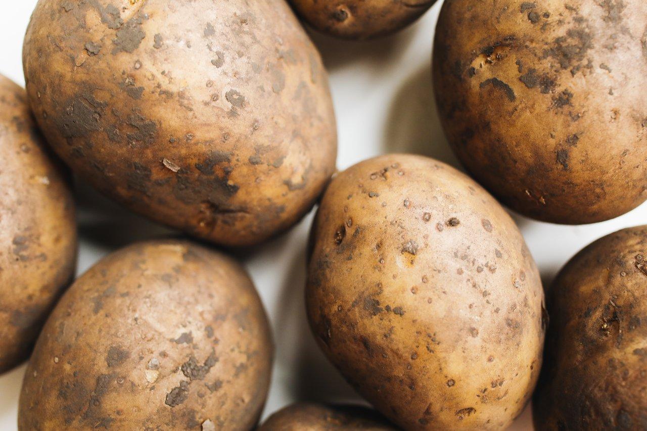 Uprawa ziemniaka na działce