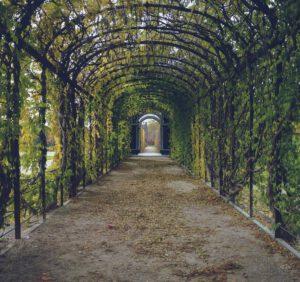 Projektowanie ogrodów – na co zwrócić uwagę?