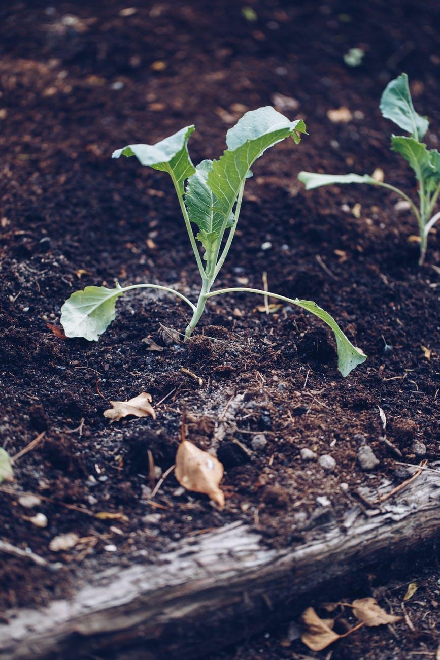 Nawozy do roślin domowych - co warto mieć?
