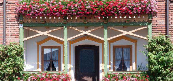 Nawożenie roślin balkonowych – jak należy o to zadbać?