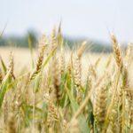Ochrona biologiczna w uprawach