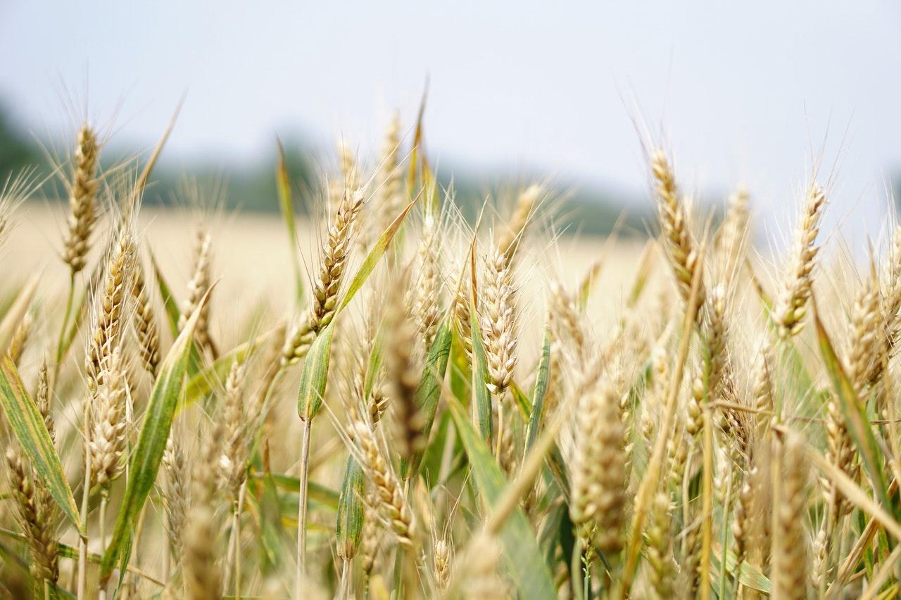Nie warto stosowac chemicznych środków do upraw