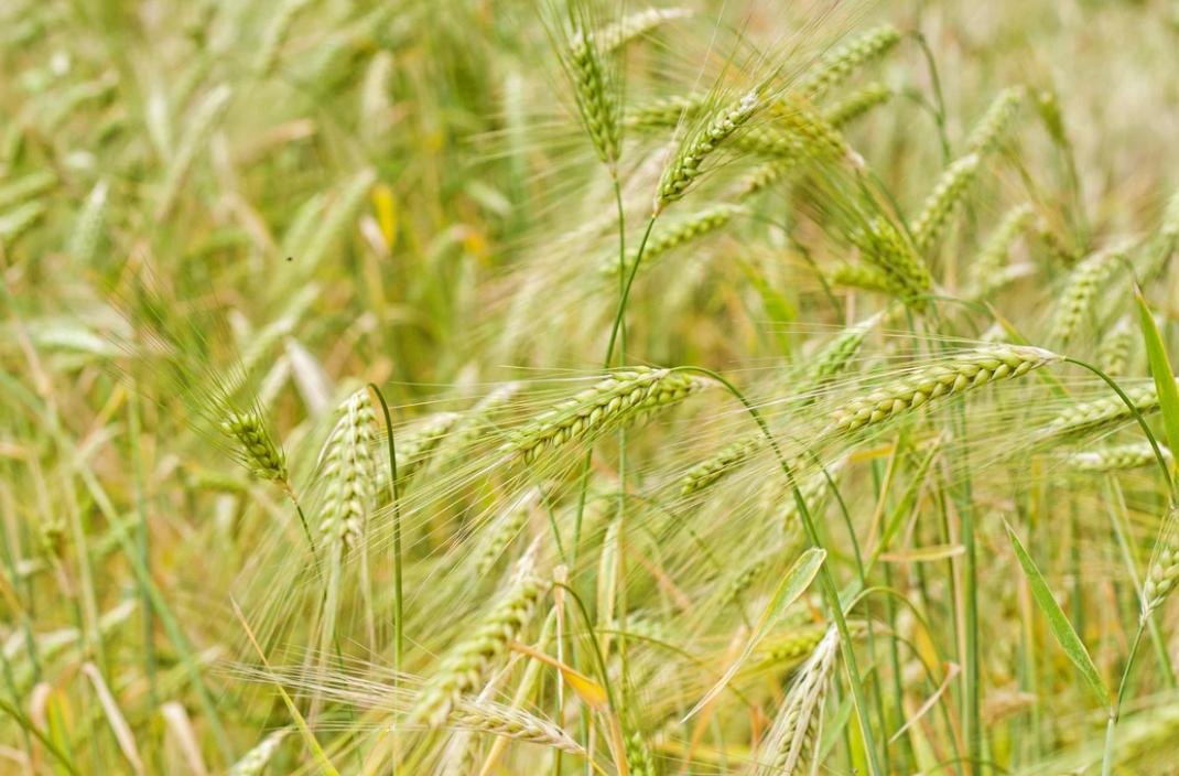 Rodzaje środków ochrony roślin