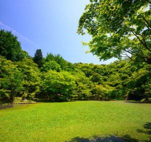 Koszenie trawnika w upały – na co zwrócić uwagę?