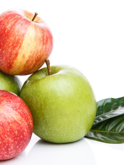 Zimowe odmiany jabłoni – Top 9 i ich charakterystyka