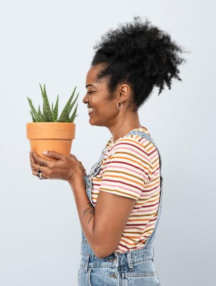 Aloes (nad)zwyczajny – pielęgnacja i uprawa w doniczce