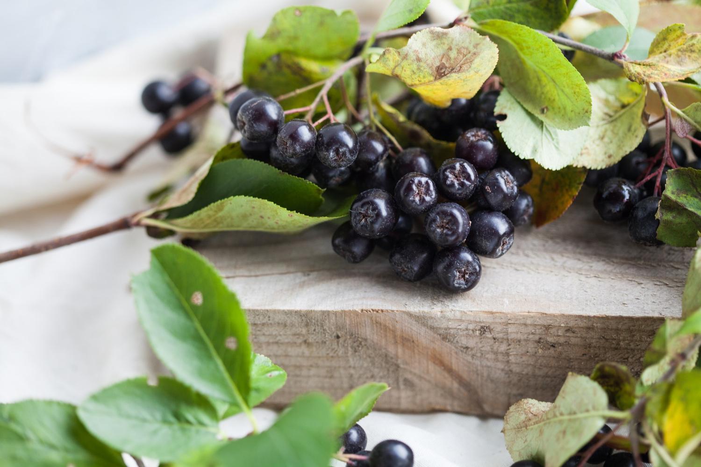 Aronia – uprawa i właściwości odżywcze