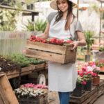 Begonia dragon – wymagania, uprawa, pielęgnacja