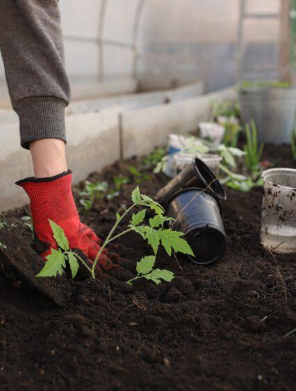 Szklarnie ogrodowe do każdego ogrodu