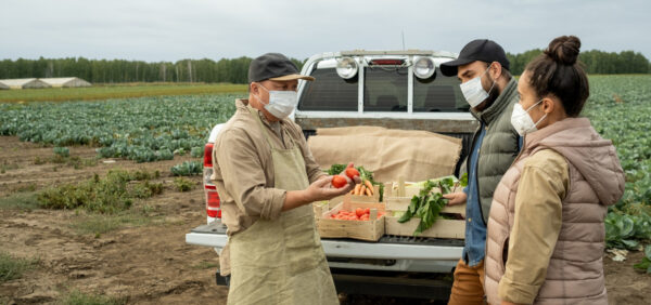 Czym jest brunatna plamistość liści pomidora i jak ją zwalczać?
